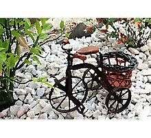 Tricycle Garden Planter Photographic Print