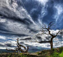 Burmis Tree Alberta Canada by Bob Christopher