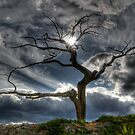 The Old Tree by Bob Christopher