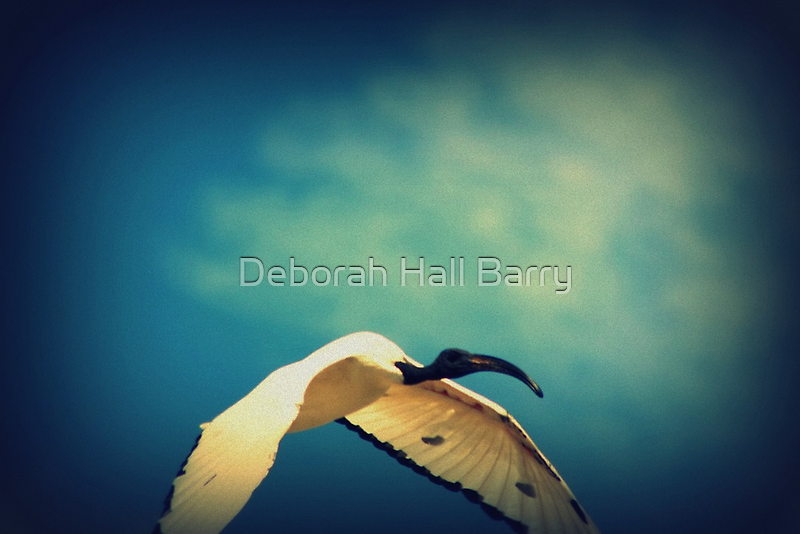 In Dreams I Fly by Deborah Hall Barry