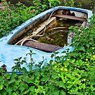 Shipwrecked In A Sea Of Nettles  by Susie Peek
