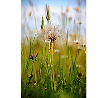 Summer Meadow Breeze Photographic Print