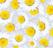 Daisy Chain by EF Fandom Design