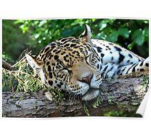 A Very Sleepy Rica Poster