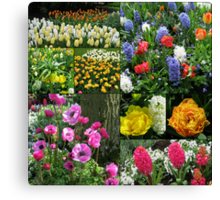 Keukenhof Collage featuring Anemones and Hyacinths Canvas Print