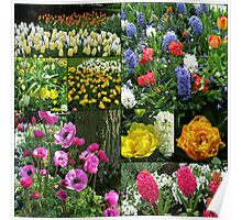 Keukenhof Collage featuring Anemones and Hyacinths Poster