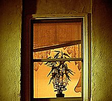 Potted Plant In Window by Jean Gregory  Evans
