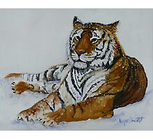 Tiger Painting  Photographic Print