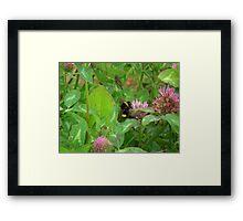 Pollenator Framed Print