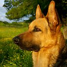 Blaze- (German Shepherd) by Lou Wilson