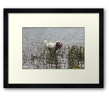 Great Pyrenees Fetching Adventure Framed Print