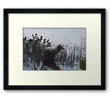 Water Adventure Flying Goliath Framed Print