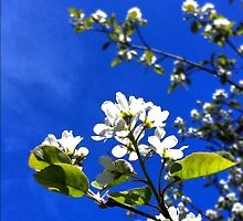 Printemps en fleurs by MissEighties