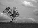 Standing Alone! by John  Kapusta