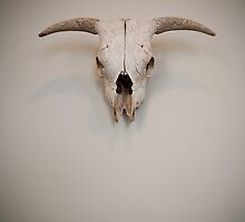 Isolated Skull by doorfrontphotos