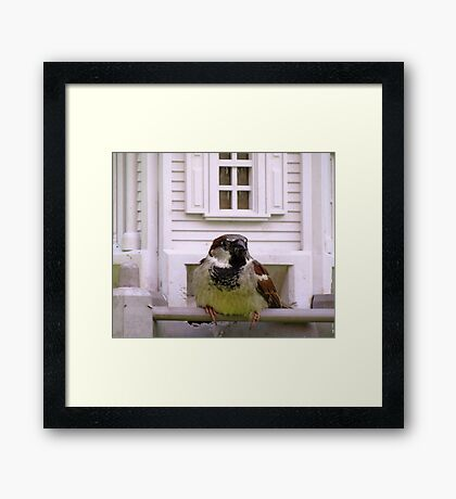 A Bug in the Beak is Worth Two in The Bush Framed Print