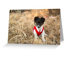 Christmas Puppy.... Greeting Card
