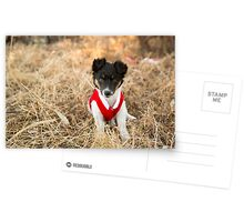 Christmas Puppy.... Postcards