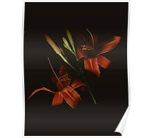 Daylilies Flowers Poster