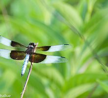 Dragonfly by Barbara Shallue