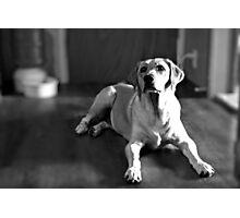 Lola-The Blind Lab Photographic Print