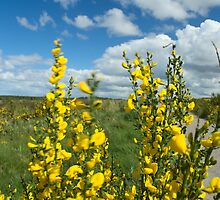 Culloden Battlefield with Flowers by AlbertLake