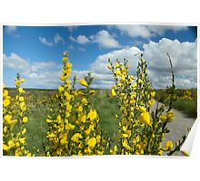 Culloden Battlefield with Flowers Poster