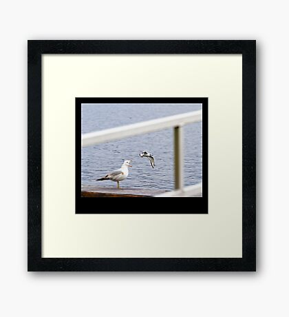 Everytime I Open My Mouth, Seagulls Go Flying Out Framed Print