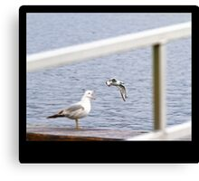 Everytime I Open My Mouth, Seagulls Go Flying Out Canvas Print