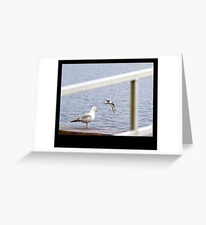 Everytime I Open My Mouth, Seagulls Go Flying Out Greeting Card