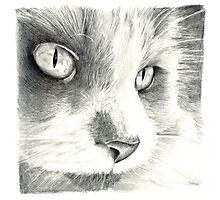 Cat Illustration Close-up Photographic Print