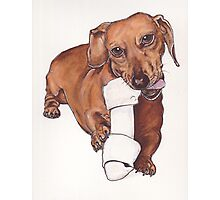 Sausage dog heaven Photographic Print