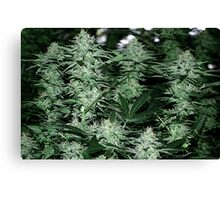 Super Potent Hybred  Canvas Print