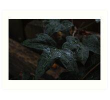 A green wet leaf  Art Print