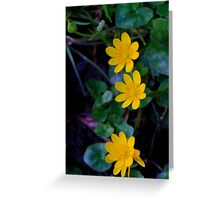 Lesser celandine (Ranunculus ficaria) Low Coniscliffe, England. Greeting Card