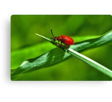 Bright red beetle on green grass Canvas Print