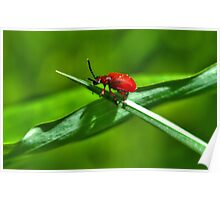 Bright red beetle on green grass Poster