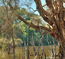 Bird Sanctuary, Bayswater, Western Australia #2 by Elaine Teague