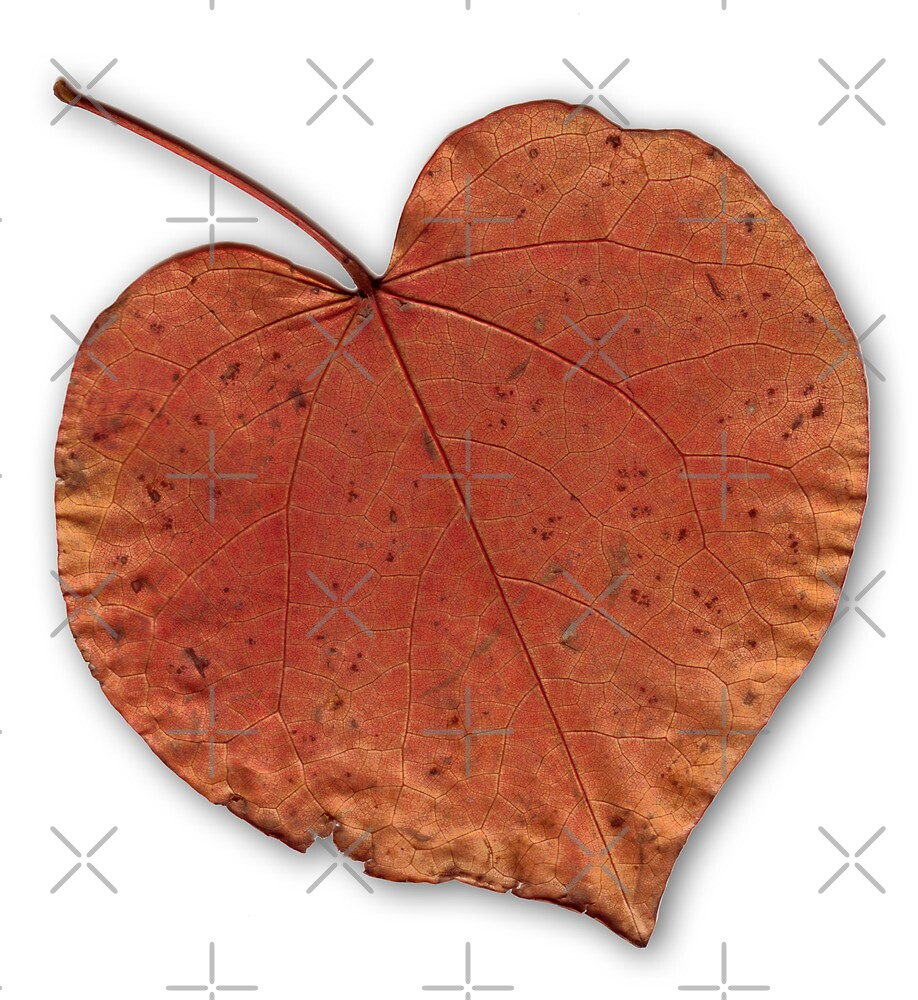 Heart Leaf #2 by axemangraphics