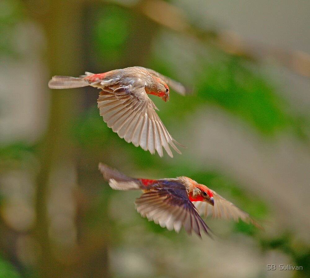 Birds of Flight Four by SB  Sullivan
