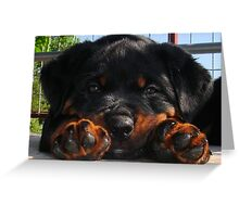 Cute Rottweiler Puppy Resting Head Between Paws Greeting Card