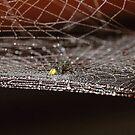 The cobweb with droplets # 1 by debjyotinayak