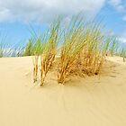Helmet grass in Belgian sand dunes by 7horses