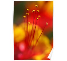 Red Bird of Paradise Poster