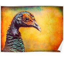 Finer Feathered Friends: Occelated Turkey Poster