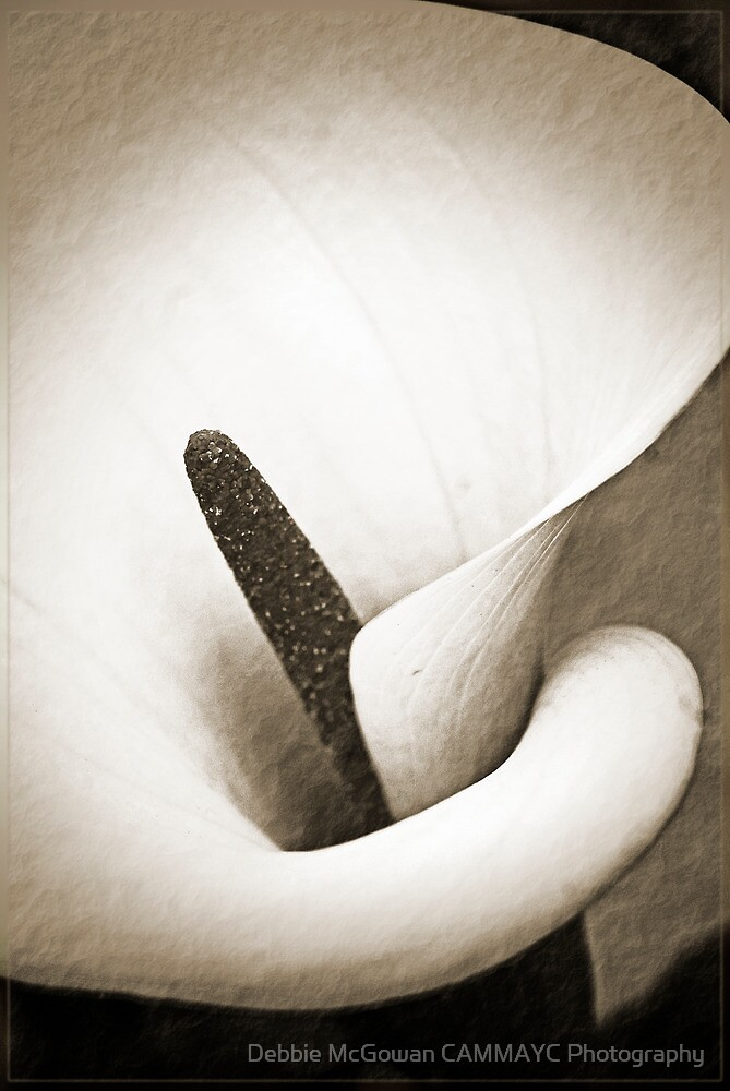 Antique Floral 1 by Debbie McGowan CAMMAYC Photography