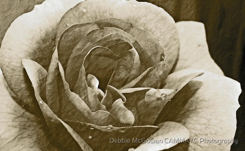 Antique Floral 3 by Debbie McGowan CAMMAYC Photography