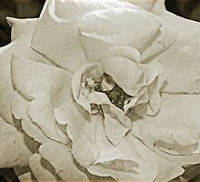 Antique Floral 5 by Debbie McGowan CAMMAYC Photography