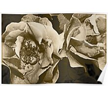 Antique Floral 6 Poster