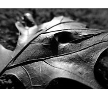 FALLEN LEAF Photographic Print